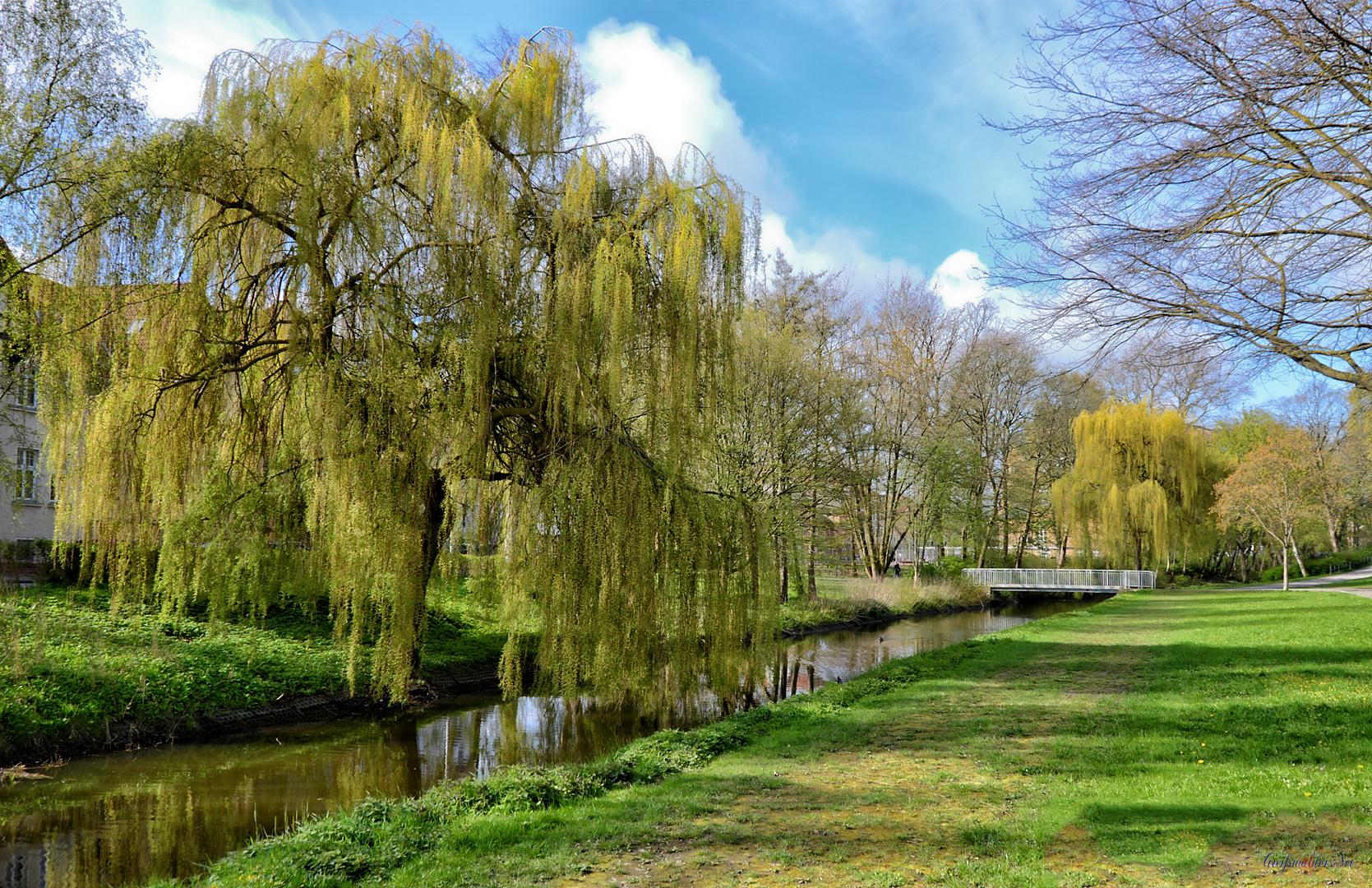 Frühling in Greifswald