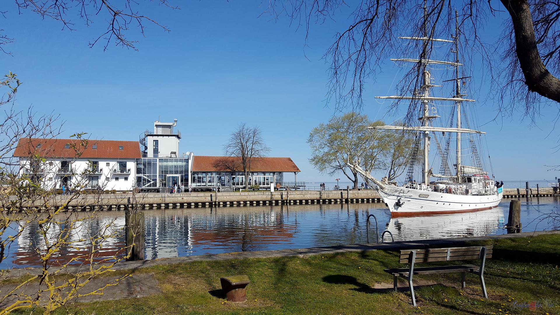 Heimkehr Segelschulschiff GREIF Greifswald-Wieck