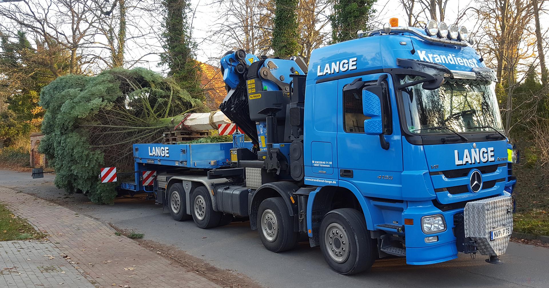 Greifswalder Weihnachtsbaum aus Weitenhagen