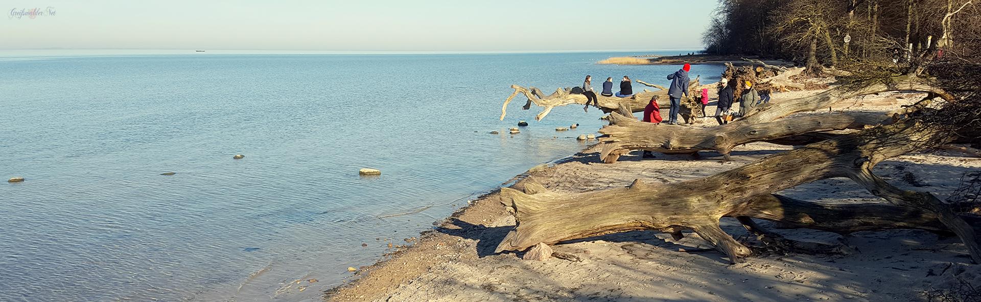 Beliebtes Ausflugsziel - Schlafende Bäume am Strand bei Loissin