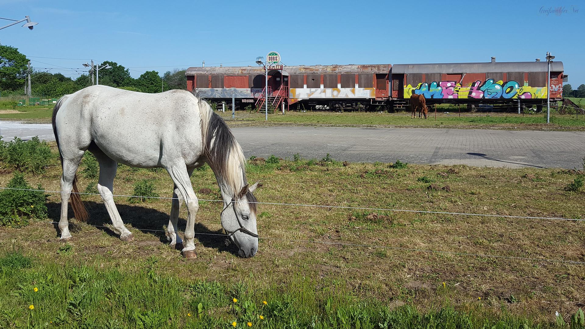 Pferde am ehemaligen Doris Diner (American Restaurant) in Wackerow
