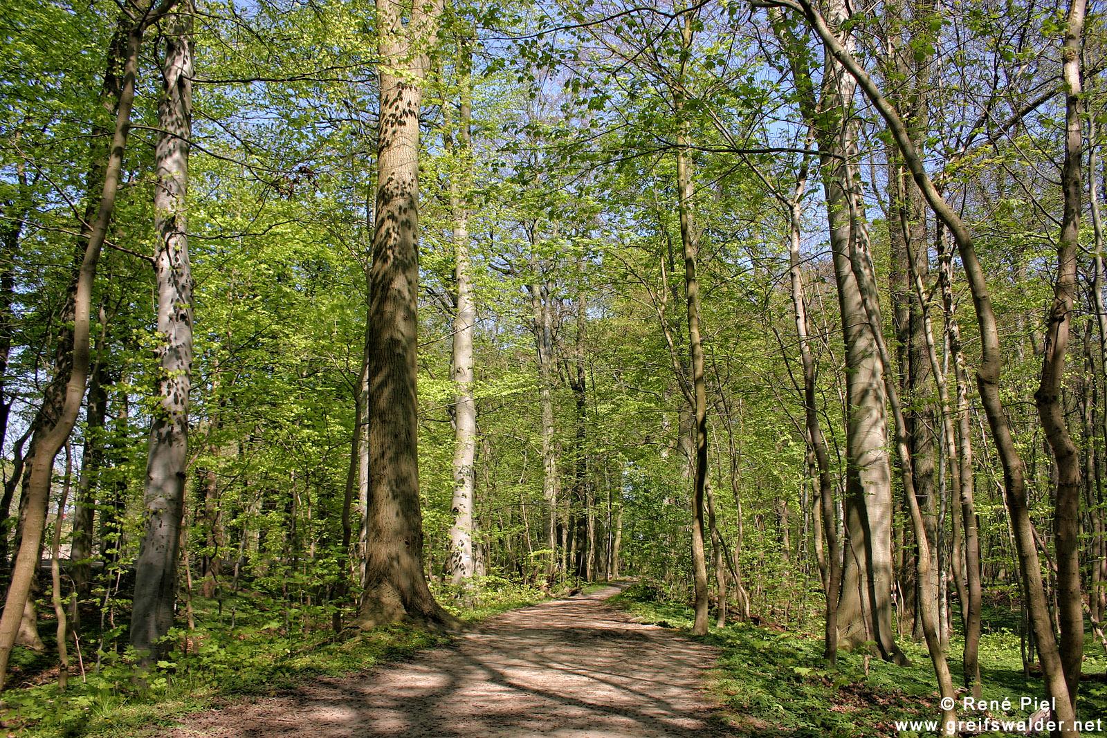 Elisenhain im Naturschutzgebiet Eldena