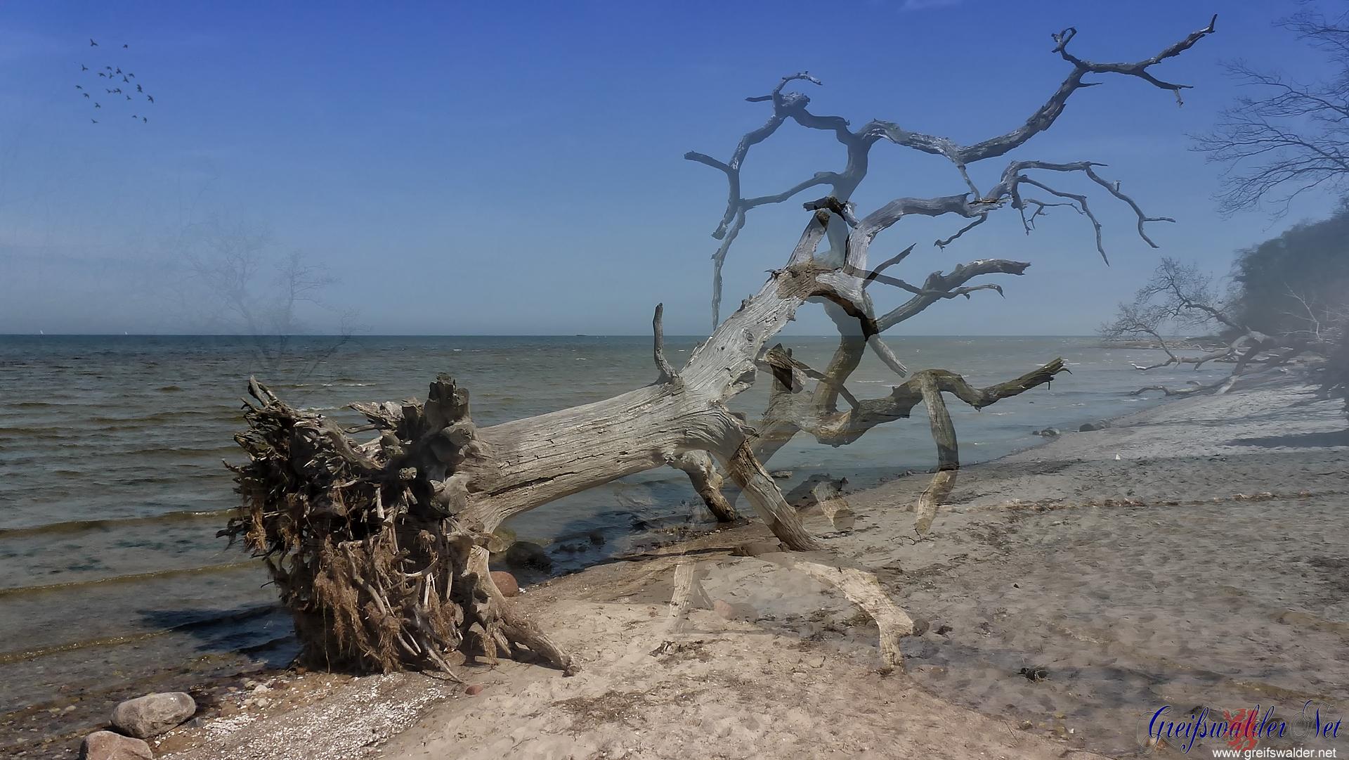 Bäume am Strand (Fotomontage)