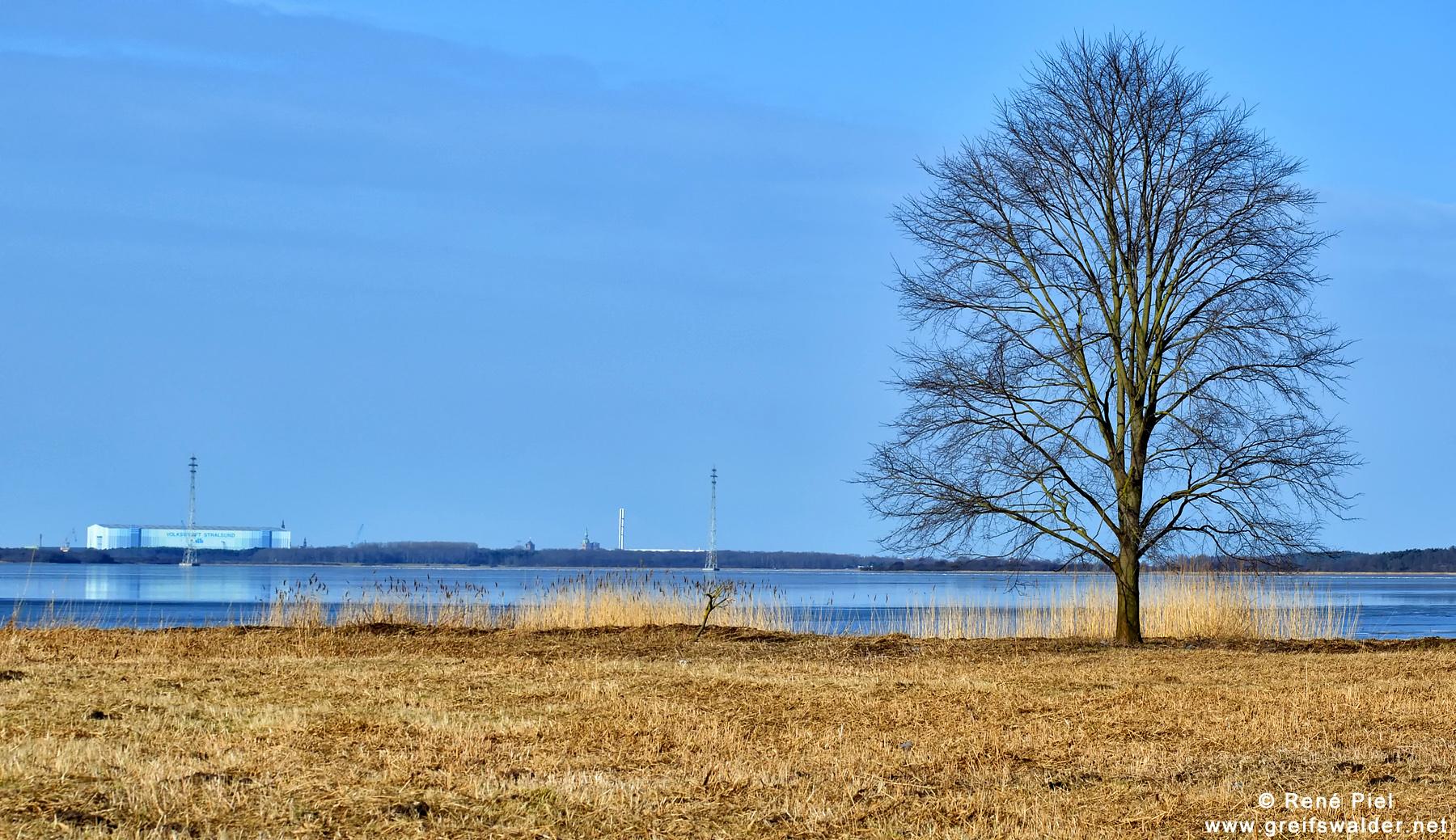 Einsamer Baum - im Hintergrund Stralsund