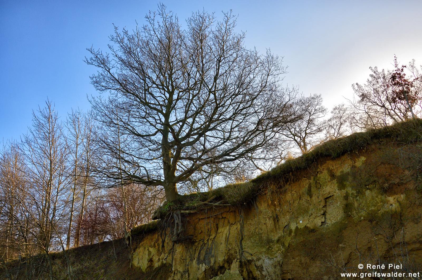 Baum an der Kante