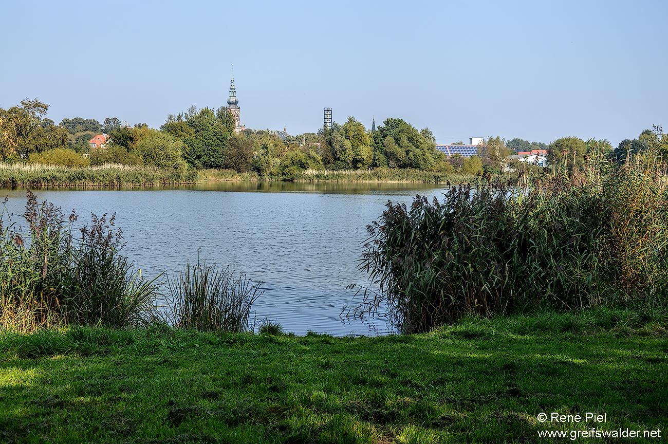 Teich bei der Fleischerwiese in Greifswald