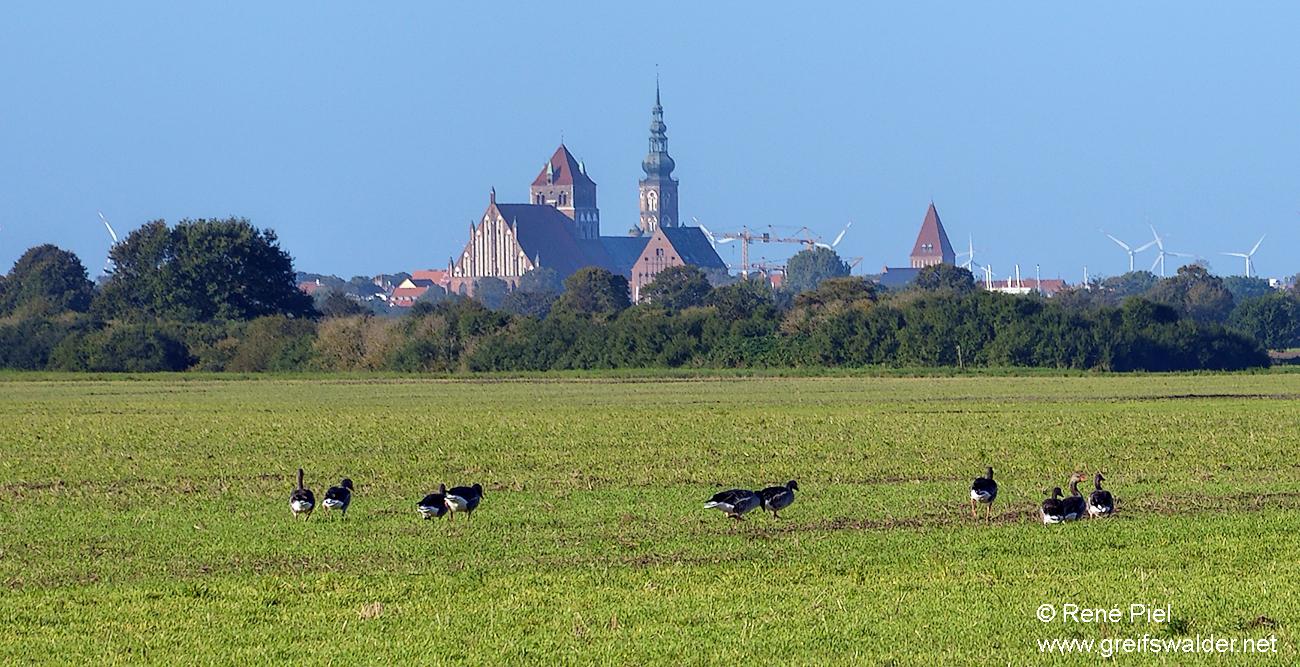 Früher Morgen - Blick auf Greifswald