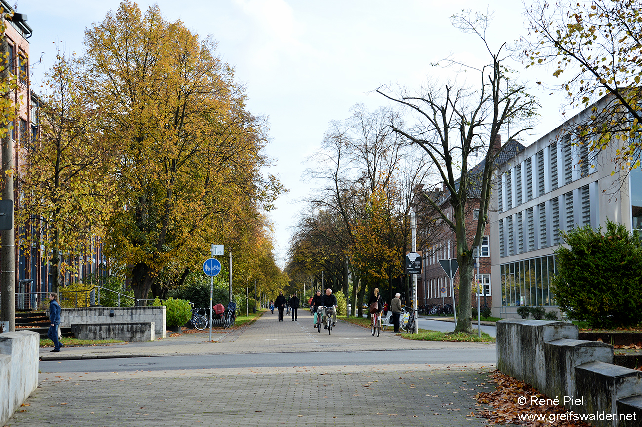 Pappelallee in Greifswald