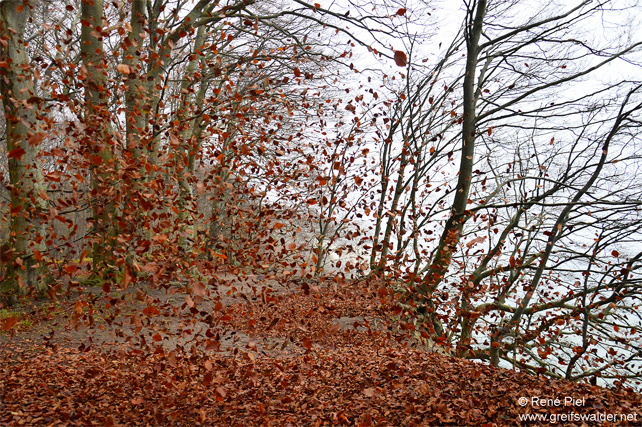 Blättersturm