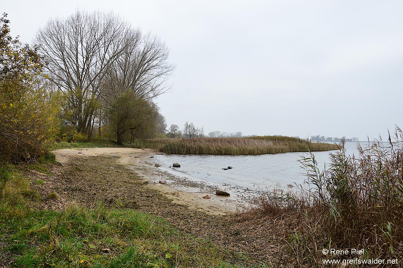 Am Kuhstrand in Greifswald-Eldena