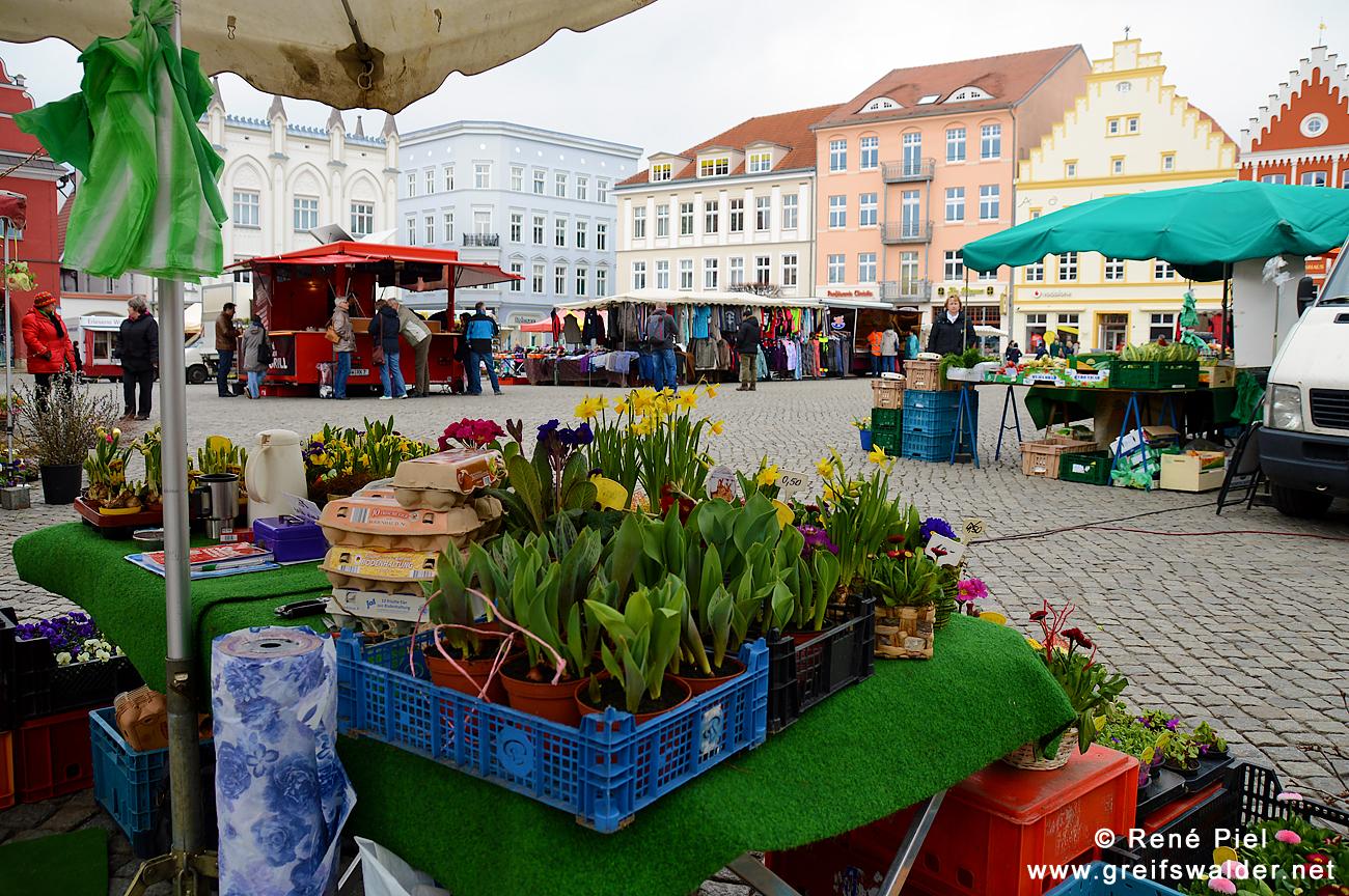 Frühling auf dem Marktplatz in Greifswald