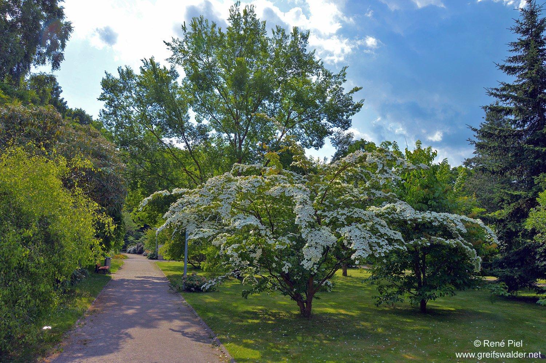 Im Arboretum des Botanischen Gartens in Greifswald