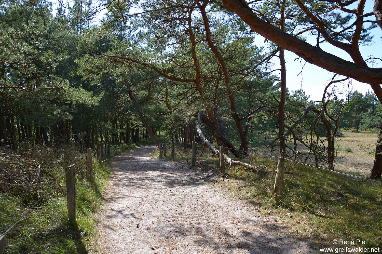 Wanderweg zum Leuchtturm Darßer Ort