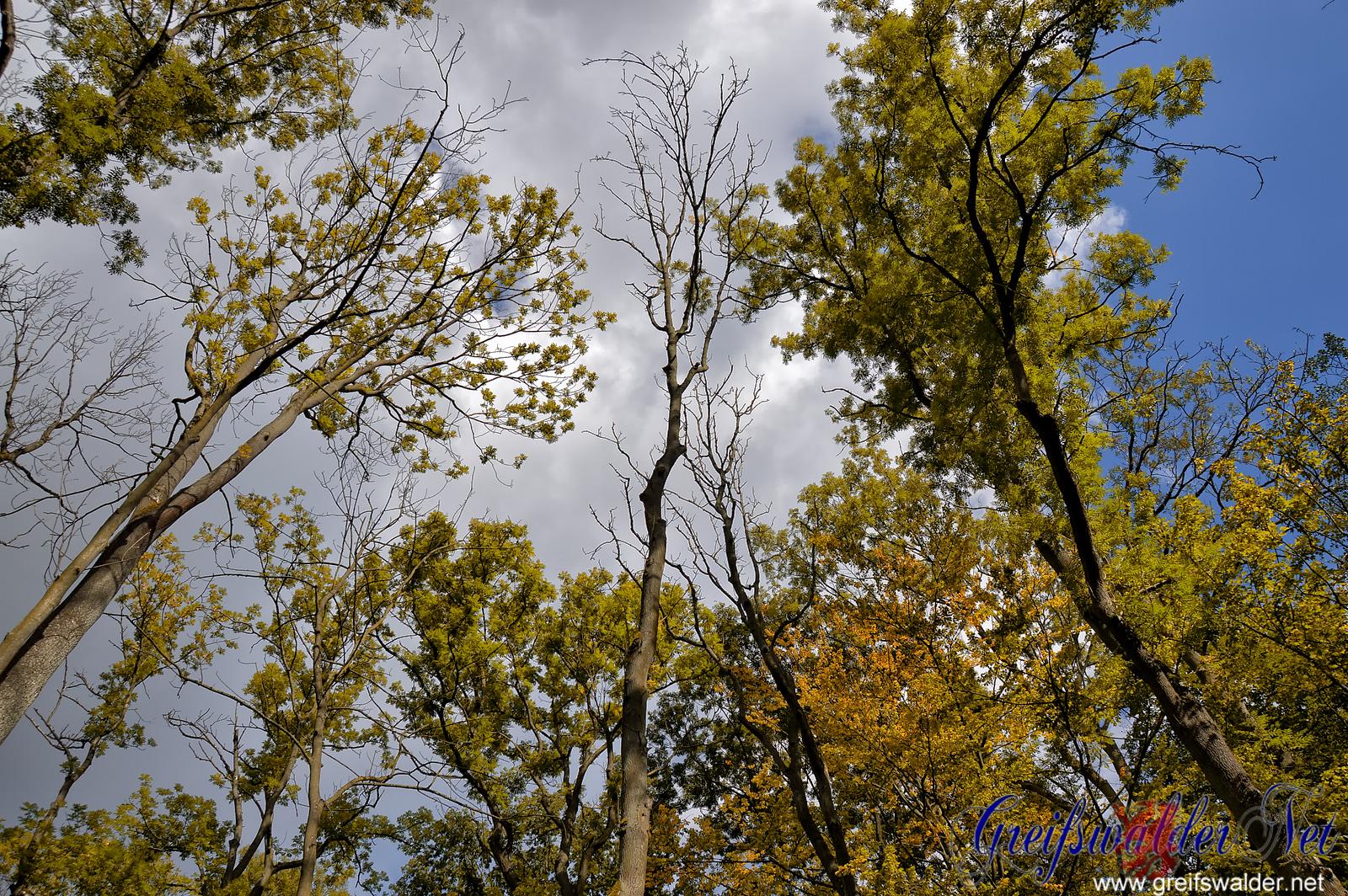 Vorboten des Herbstes