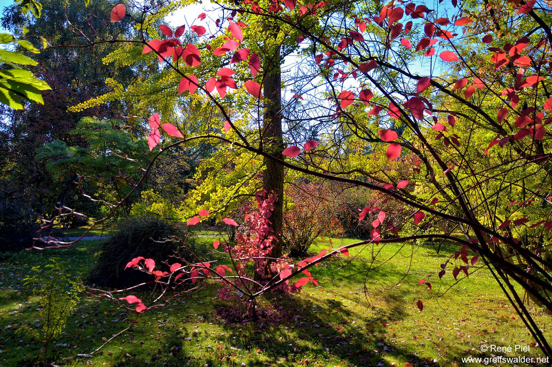 Herbstlicher Kontrast