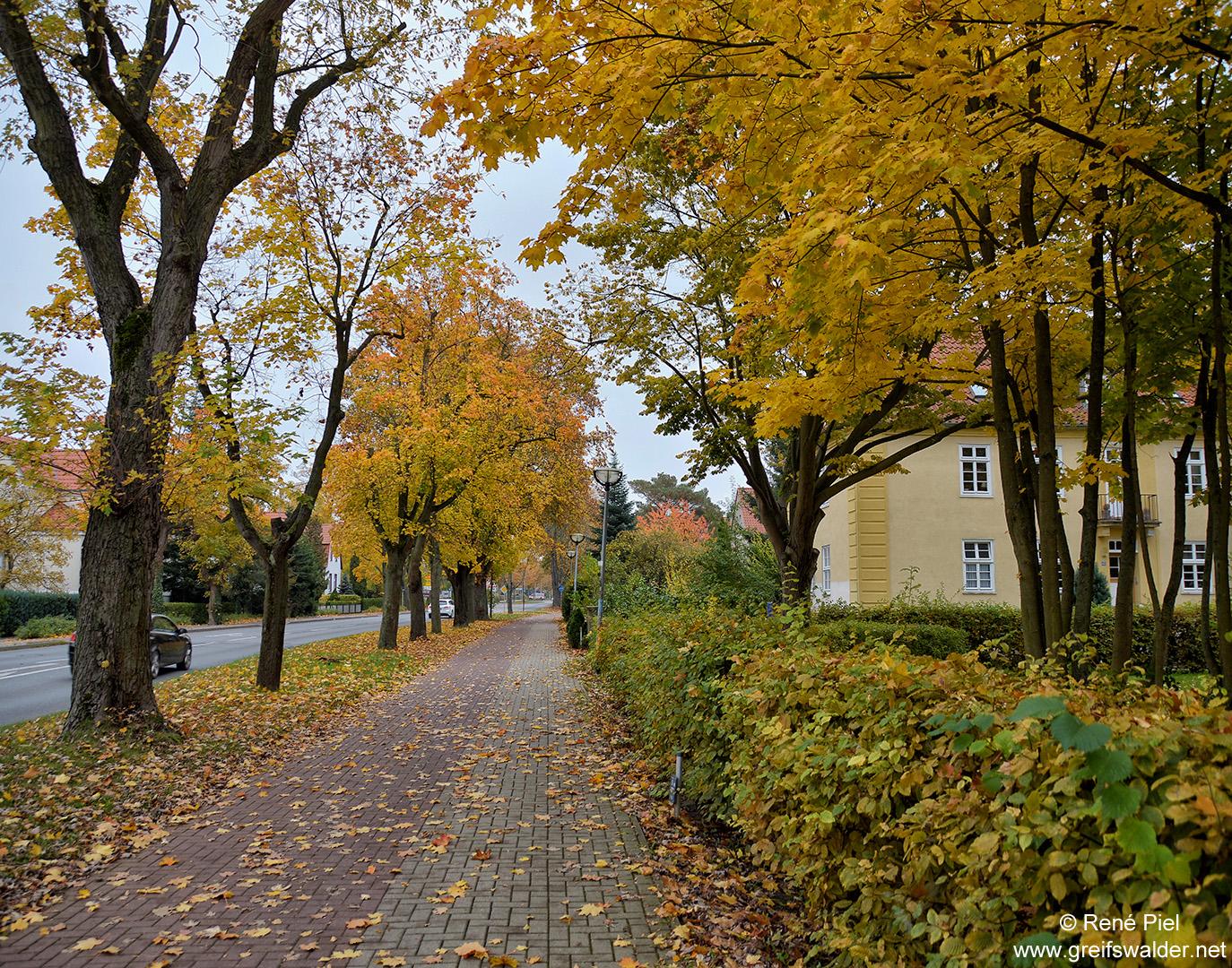 Bunter Herbst in der Wolgaster Straße in Greifswald