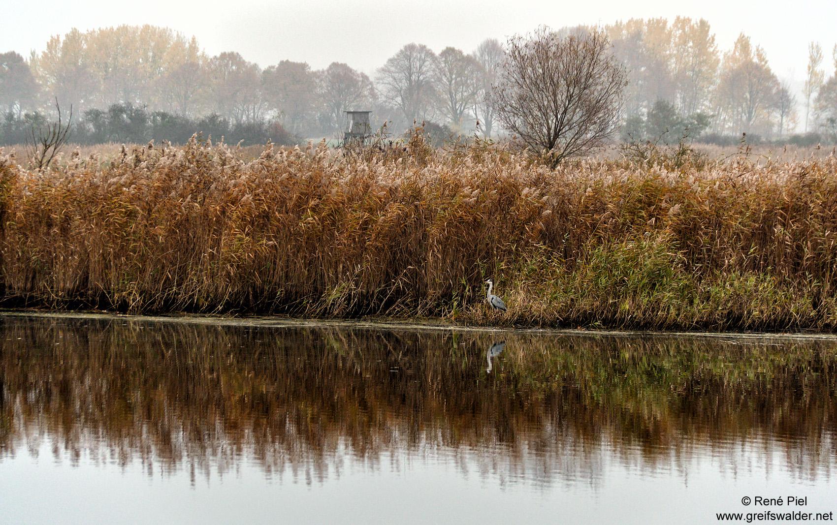Herbststimmung am Ryck in Greifswald