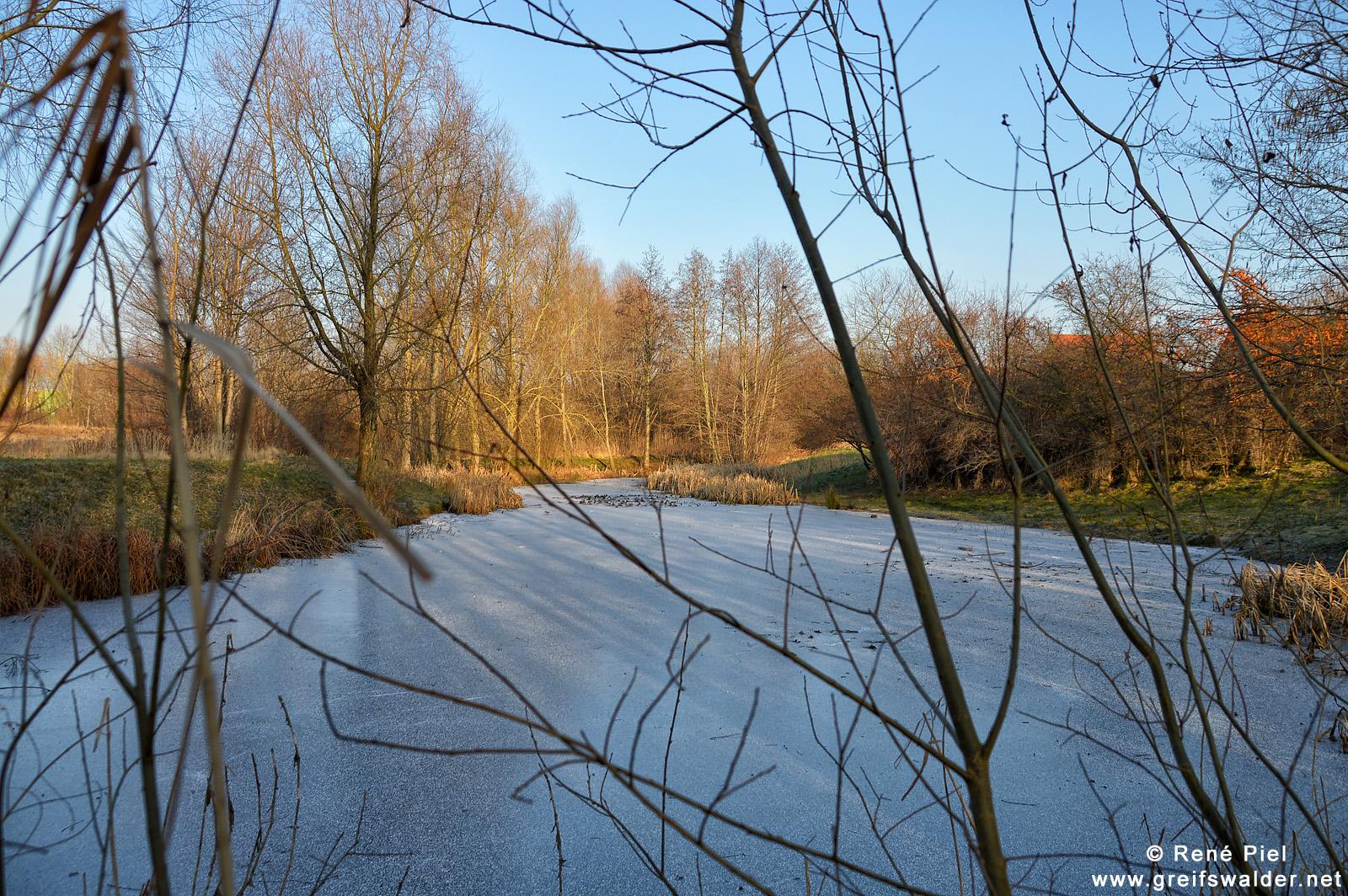 Teich in Greifswald-Eldena