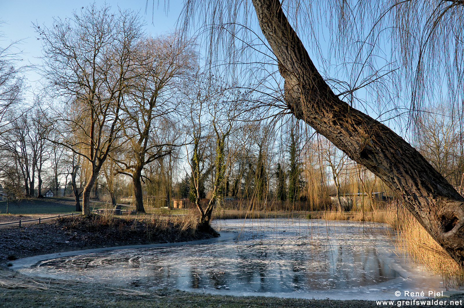 Teich in den Credner-Anlagen in Greifswald