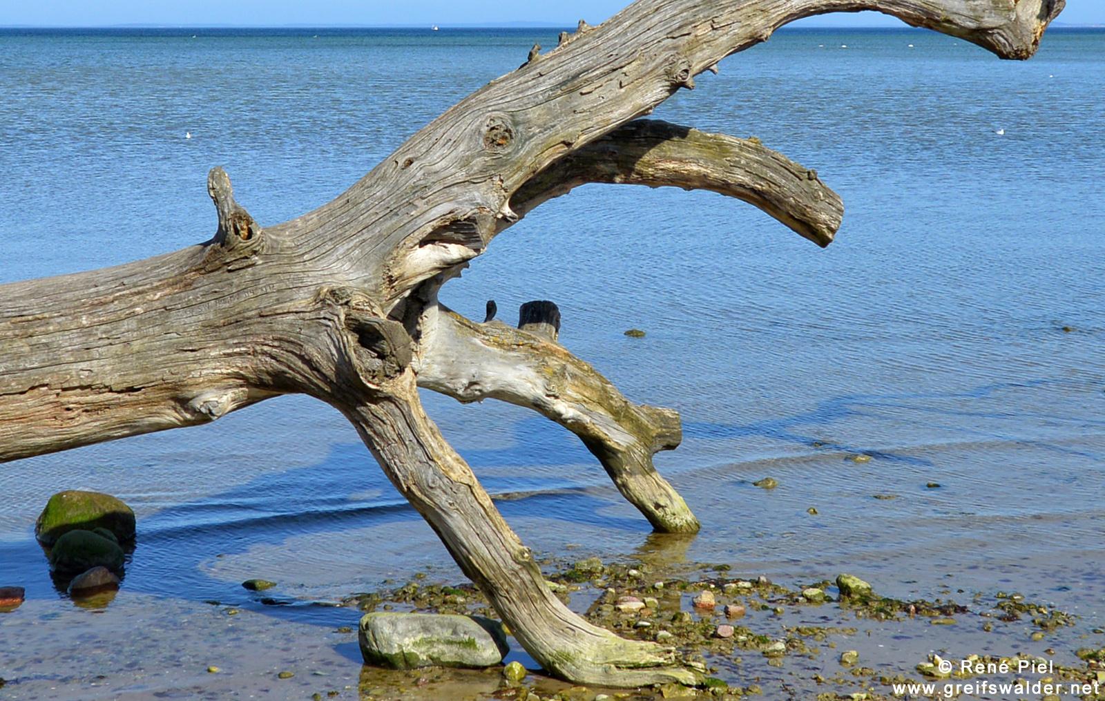 Strand am Greifswalder Bodden bei Loissin
