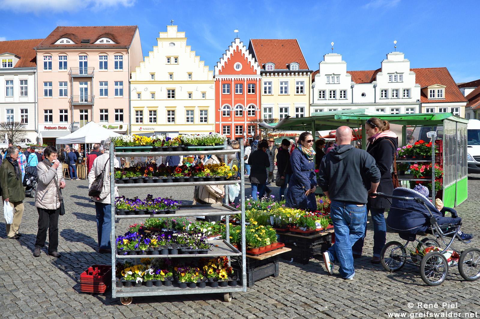 Gartenmarkt in Greifswald