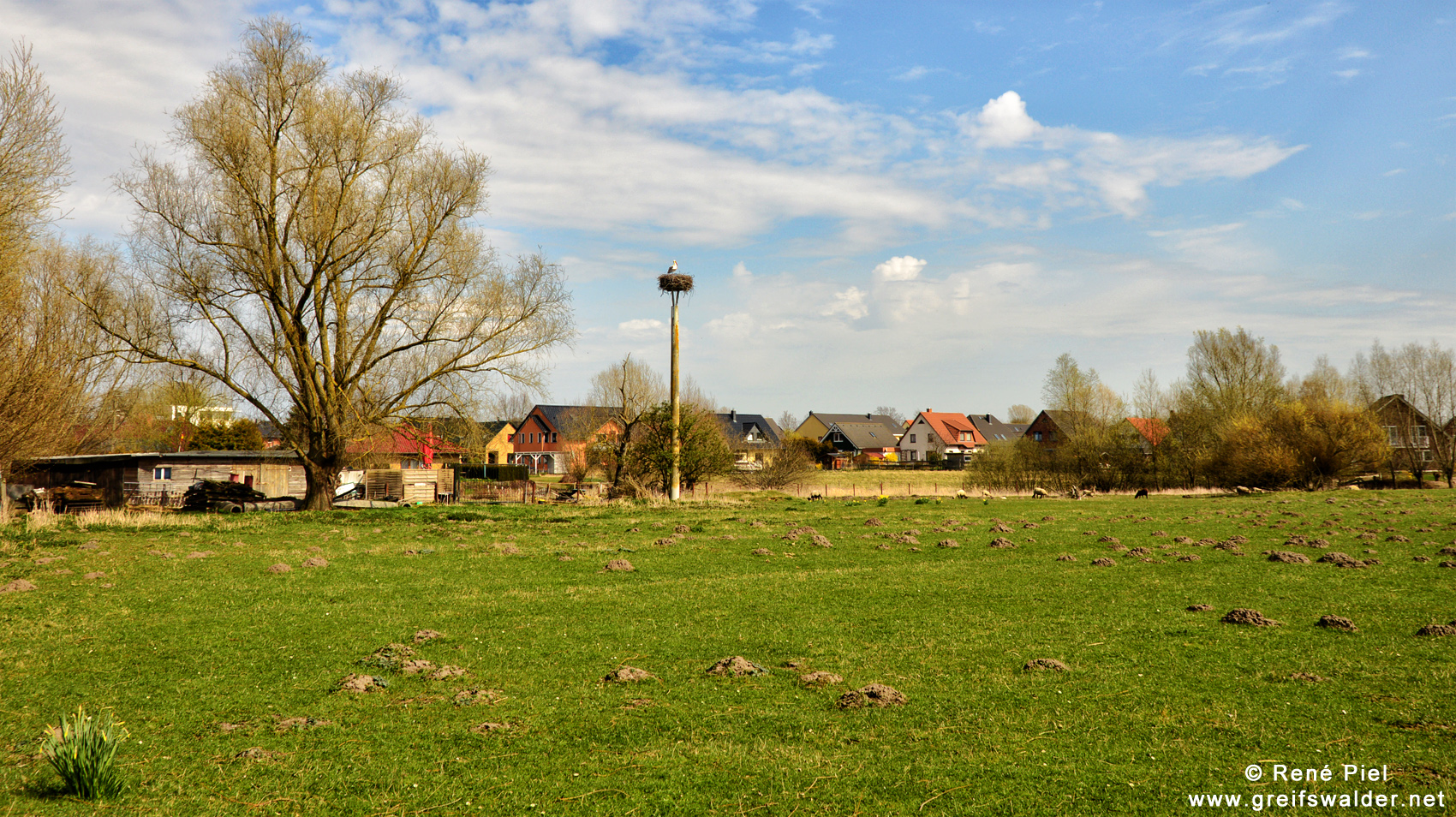 Storch in Greifswald-Eldena