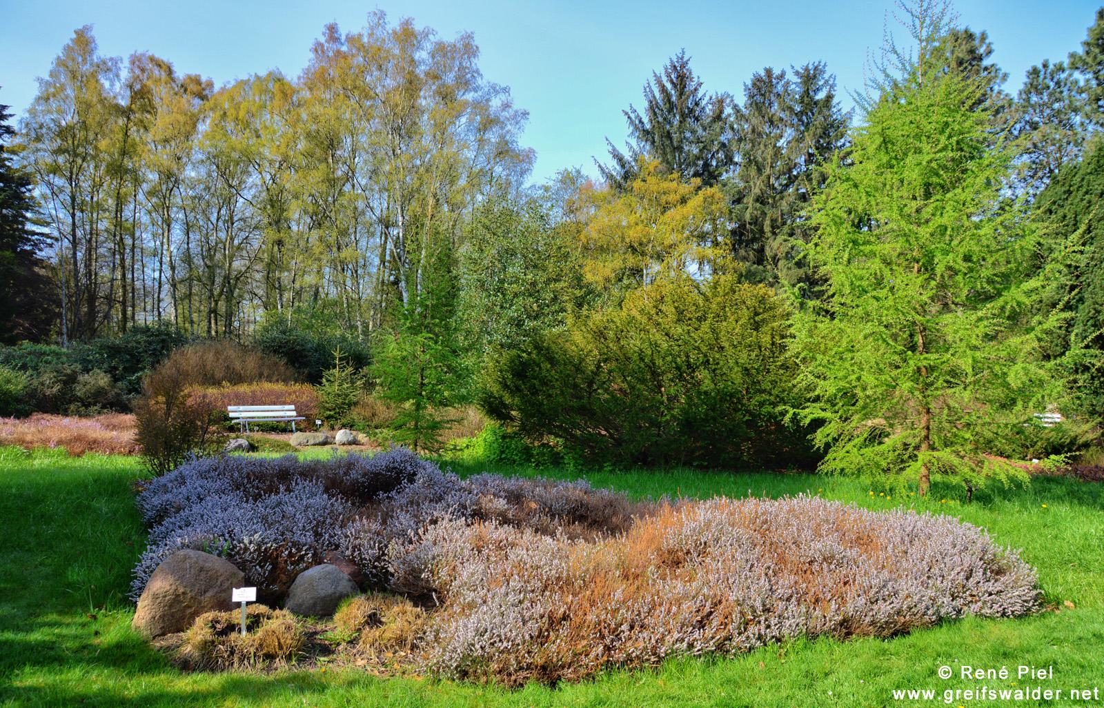 Arboretum des Botanischen Gartens in Greifswald