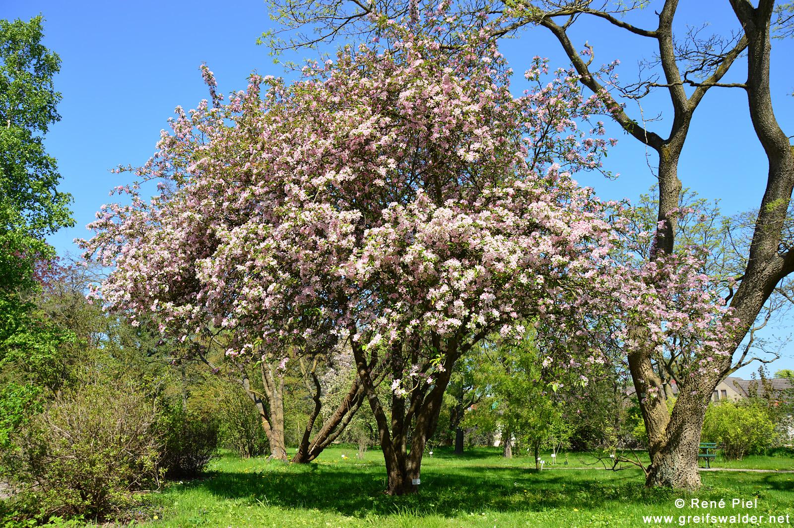Sonntagsspaziergang im Arboretum