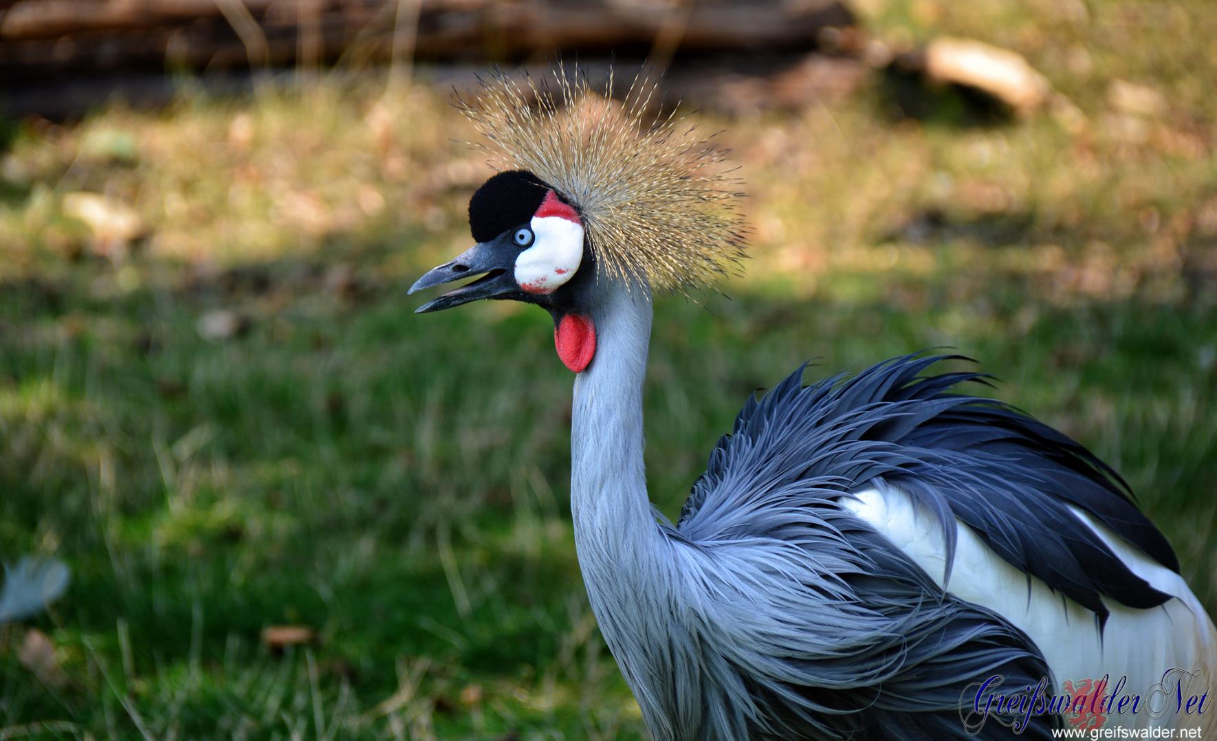 Grüße aus dem Tierpark Greifswald