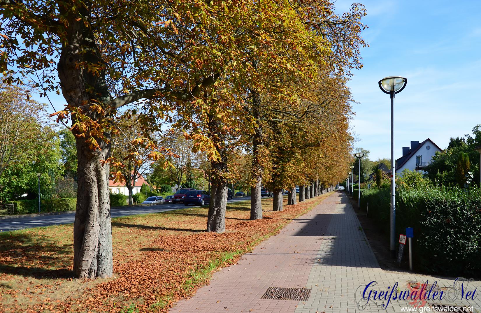 Herbstliches Greifswald