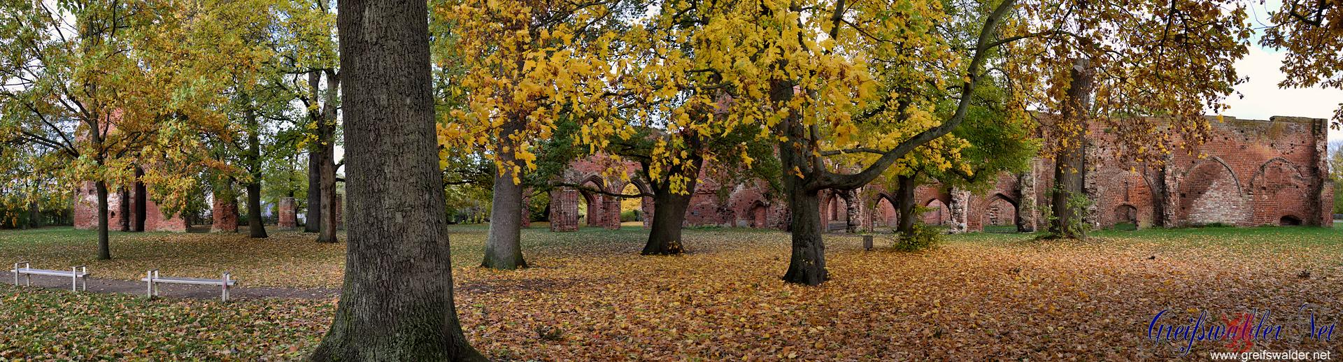 Herbstliches Panorama in der Klosterruine in Greifswald-Eldena