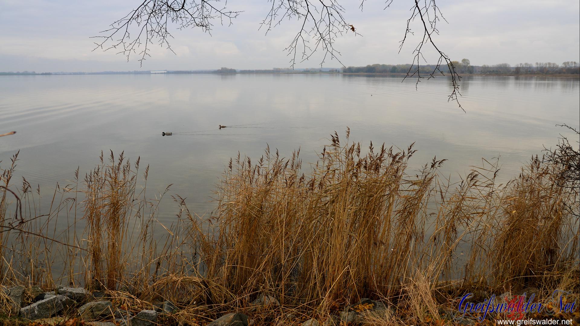 Herbstsonntag an der Dänischen Wiek in Greifswald-Wieck