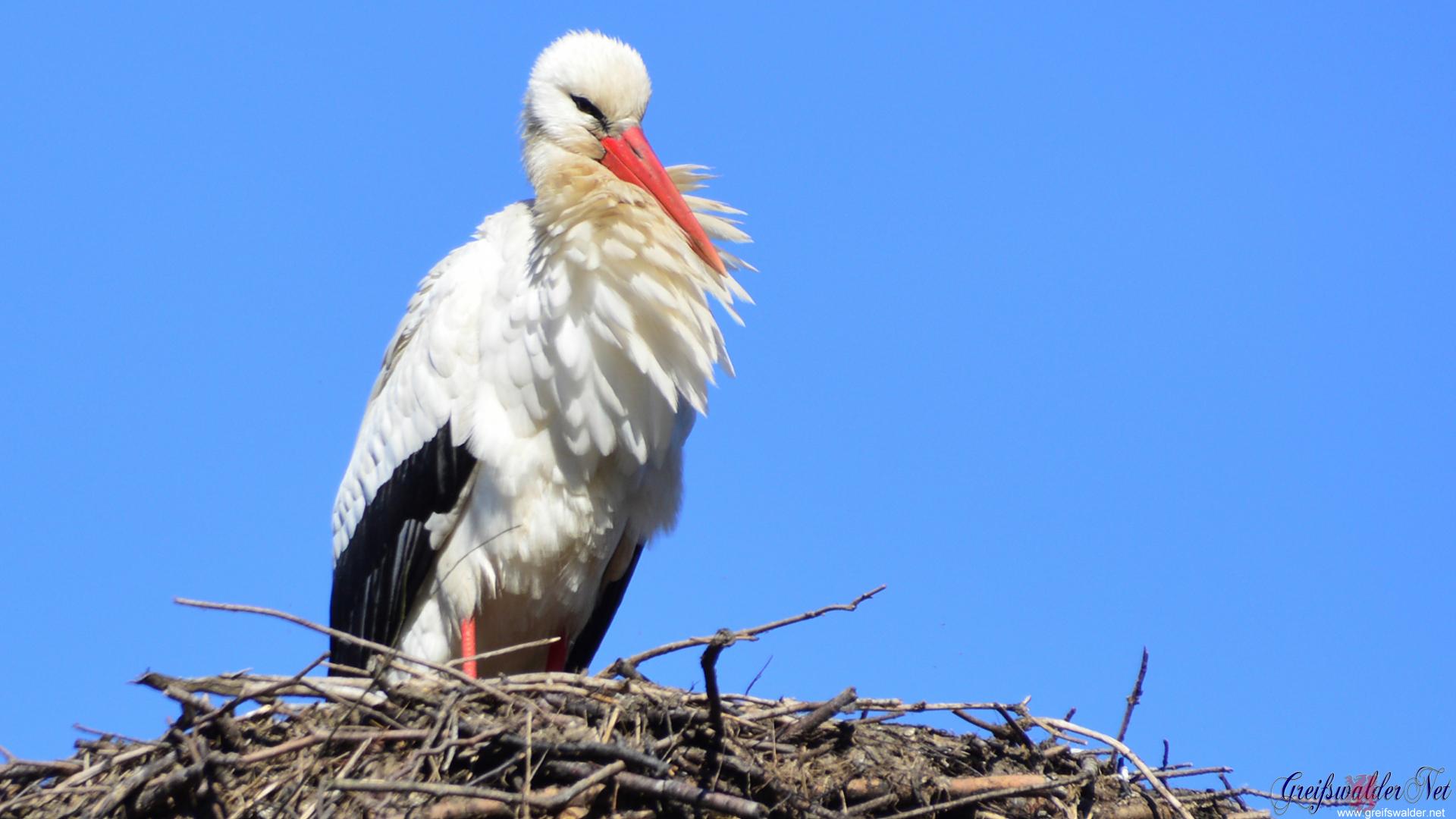 Storch im Tierpark Greifswald