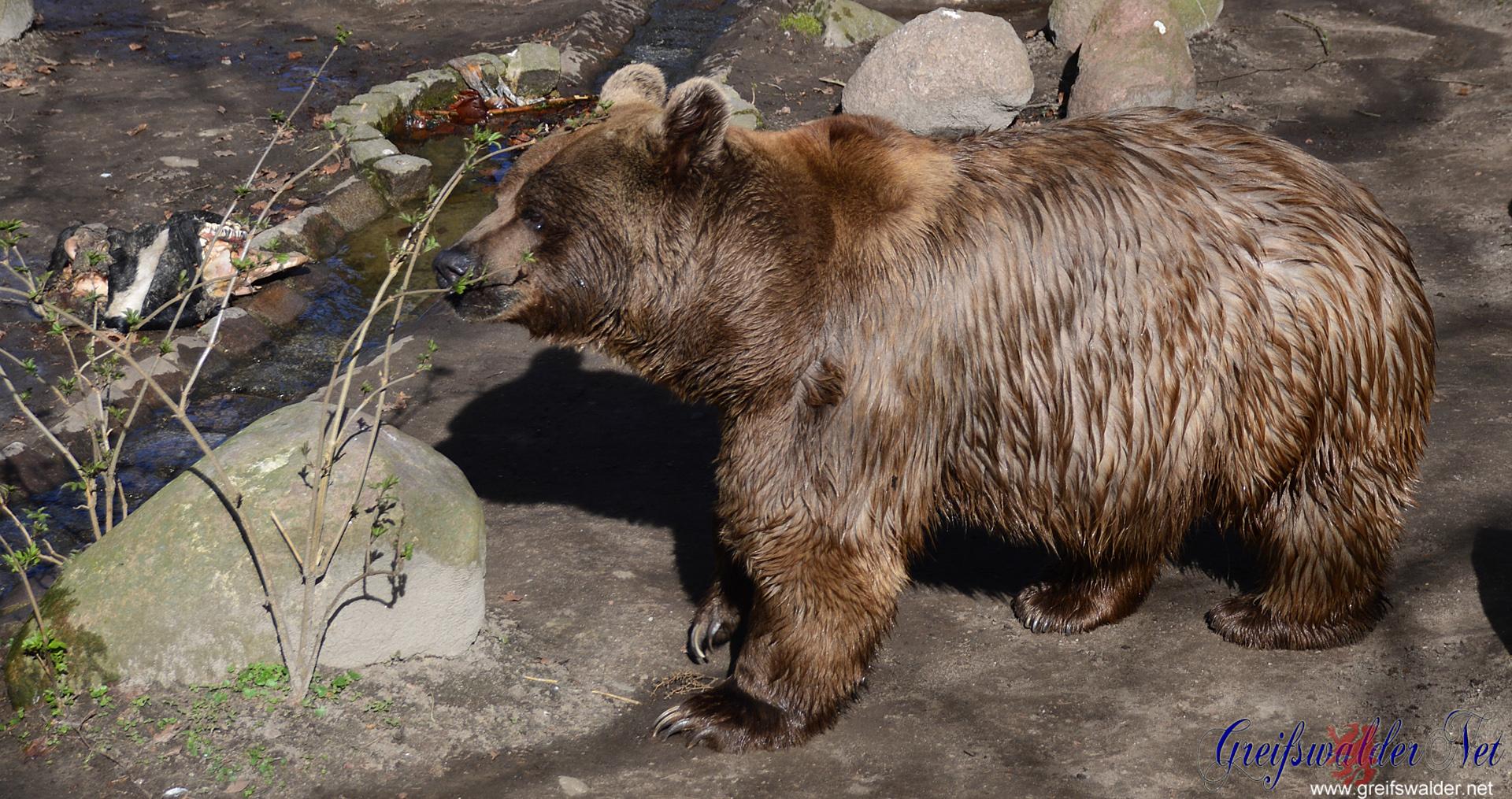 Stralsunder Tierpark