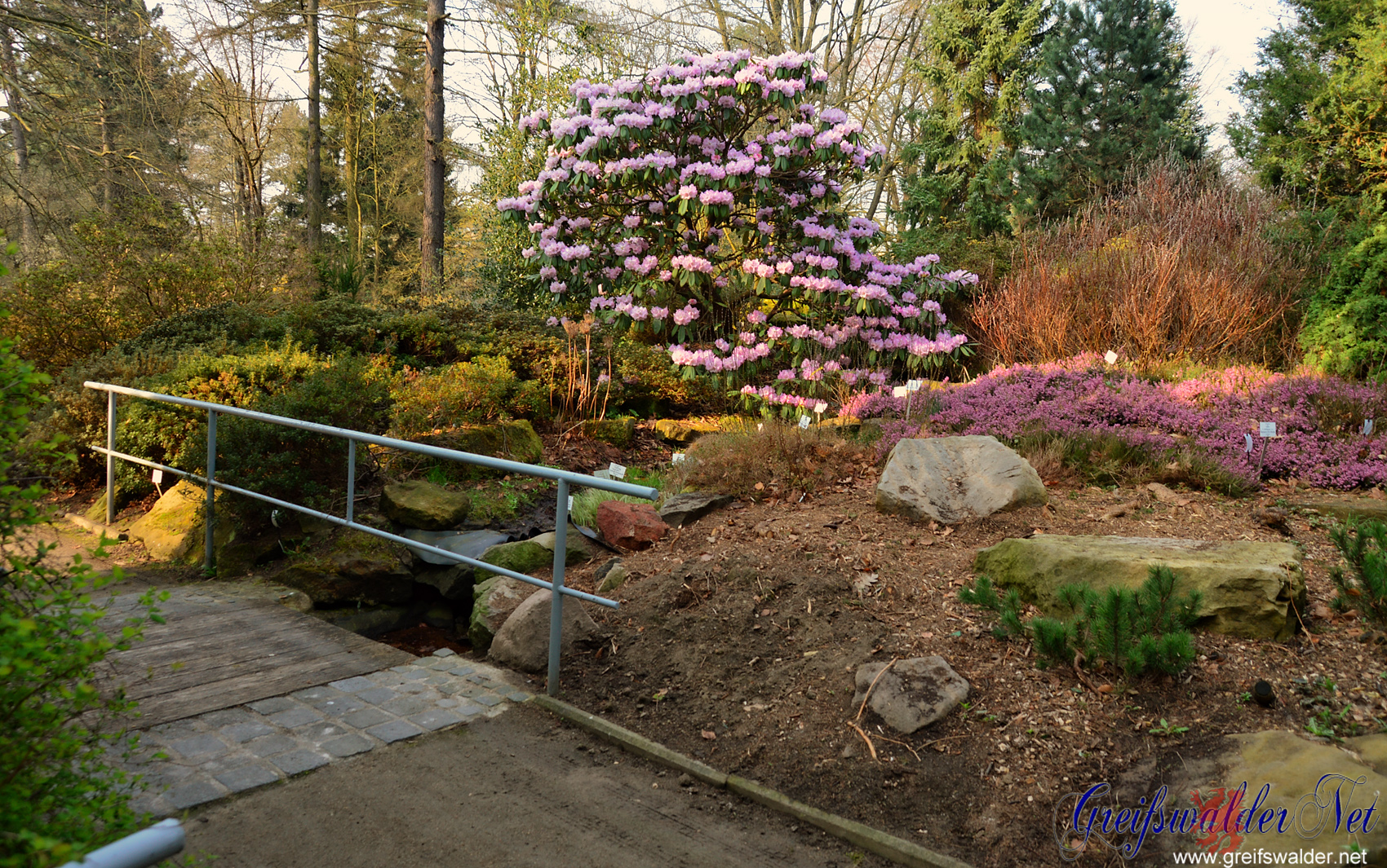 Frühling im Arboretum