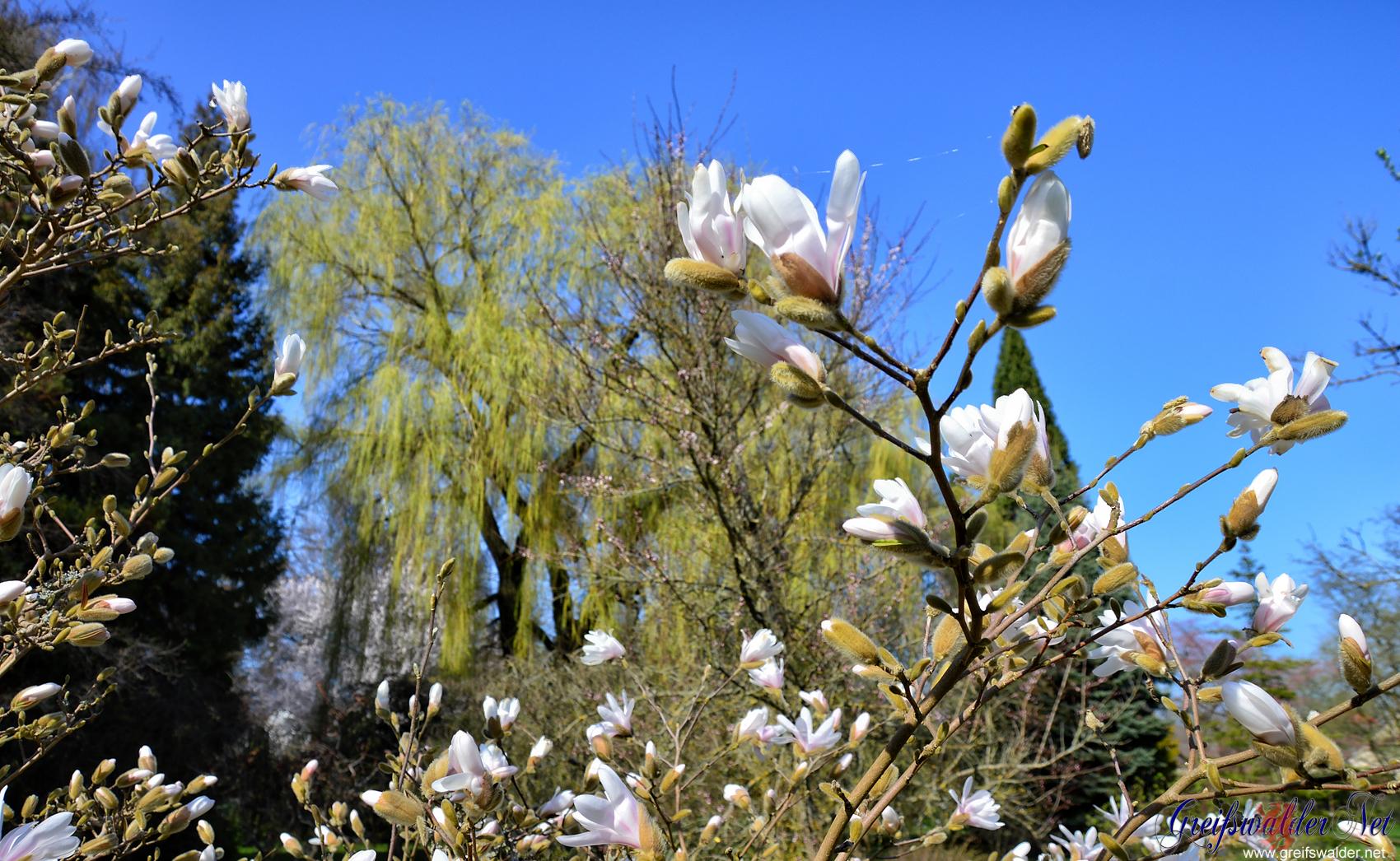 Blüten im Arboretum