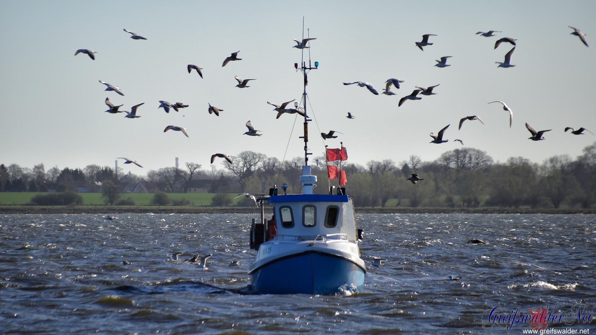 Fischerboot auf der Dänischen Wiek