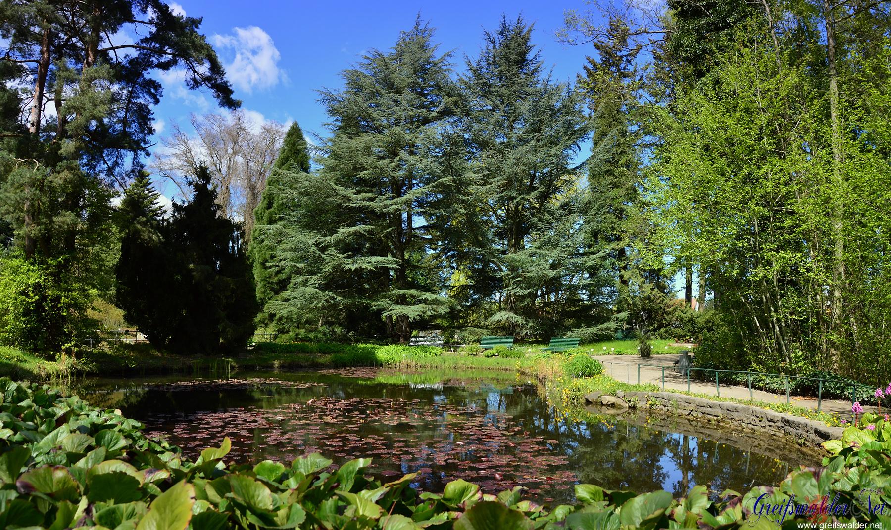 Teich im Arboretum des Botanischen Gartens in Greifswald