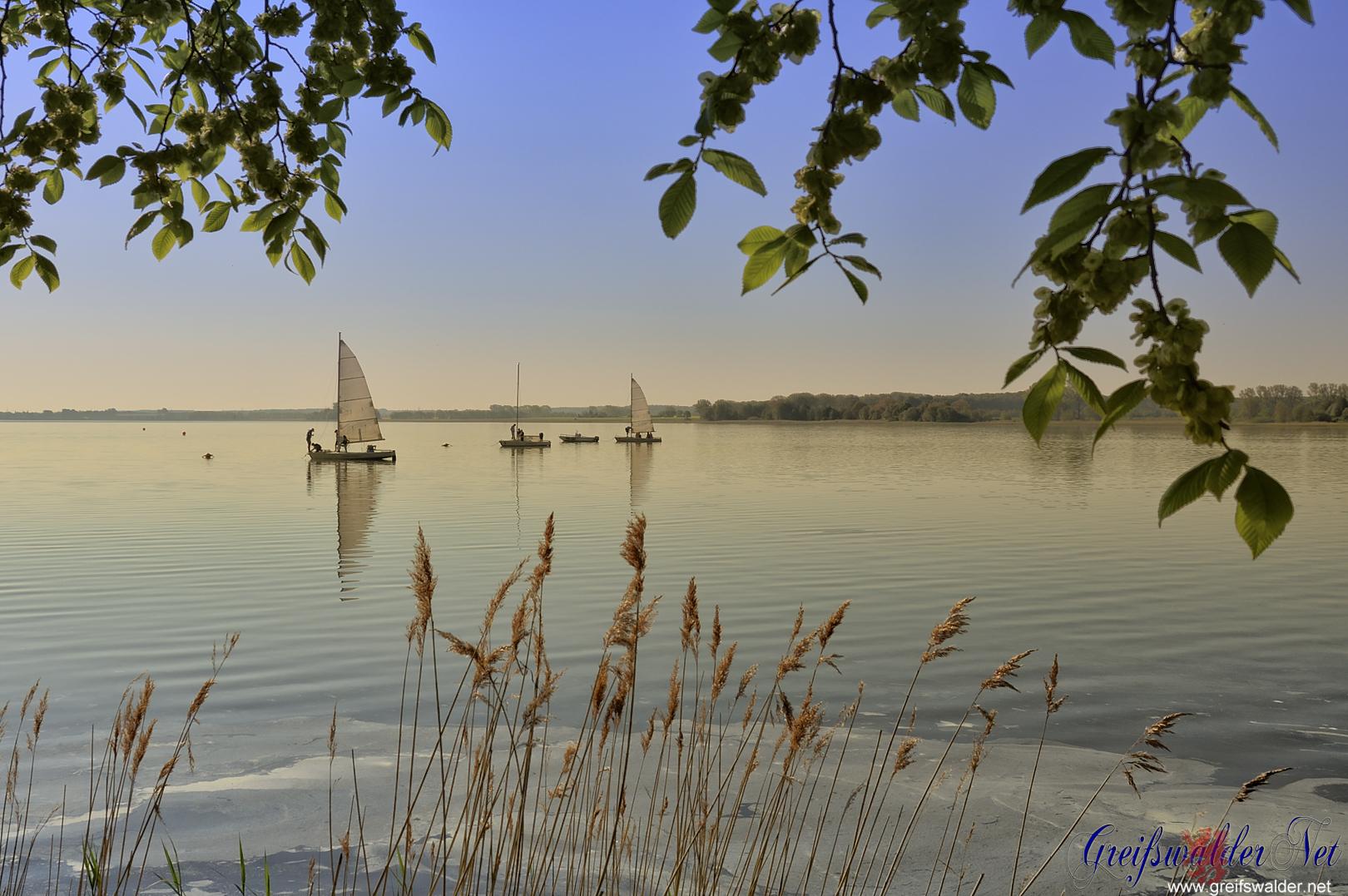 Segelboote auf der Dänischen Wiek in Greifswald-Wieck