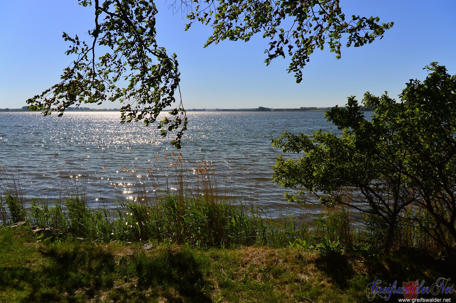 schattiges Plätzchen an der Dänischen Wiek in Greifswald-Wieck