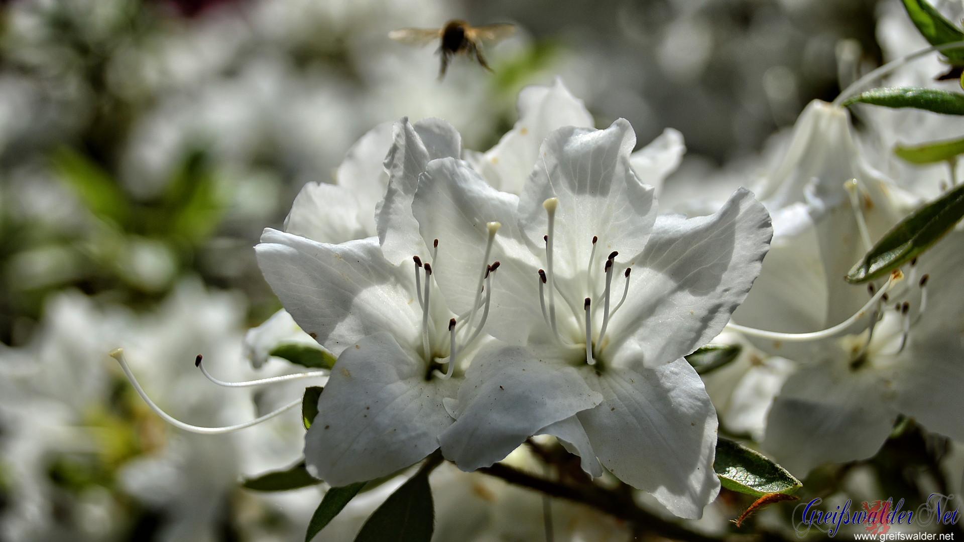 Blütenpracht im Arboretum