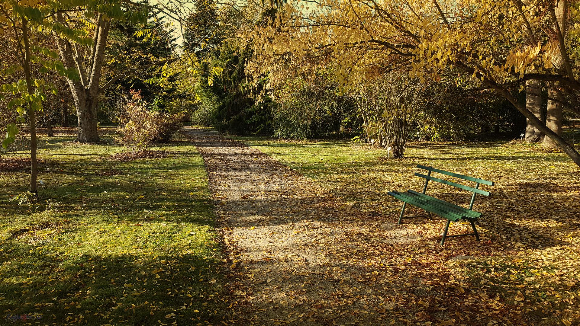 Herbstidylle im Arboretum des Botanischen Gartens in Greifswald