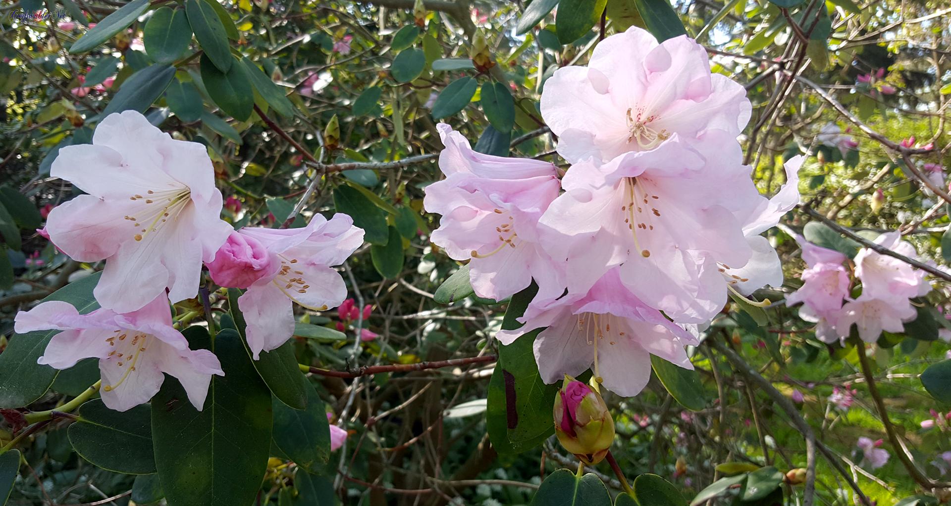 Blütenpracht im Arboretum des Botanischen Gartens Greifswald