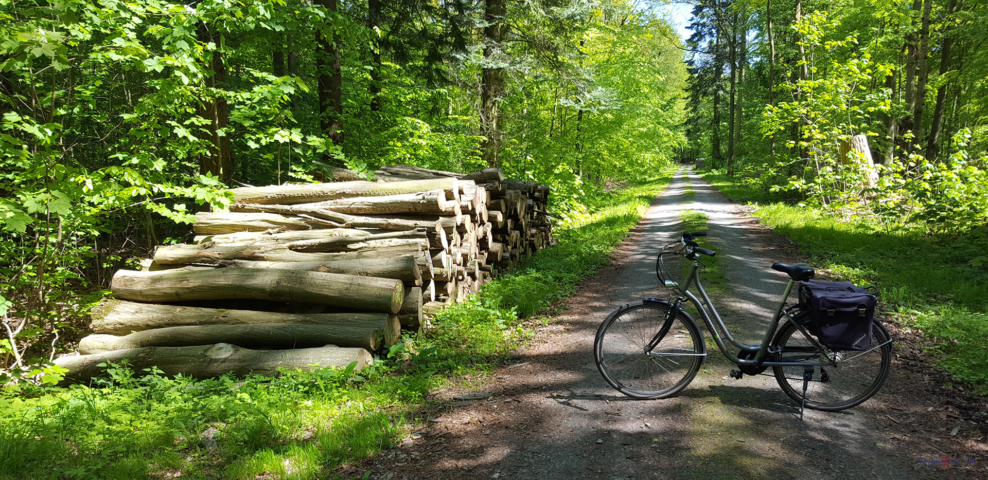 Ruhe und Erholung - Radtour durch den Wald