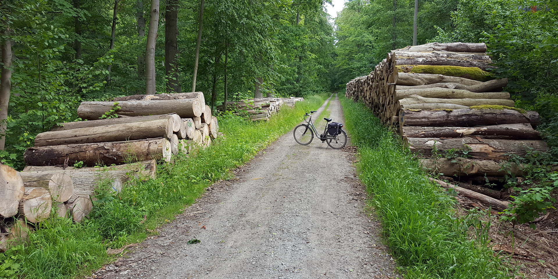 Waldweg im Elisenhain