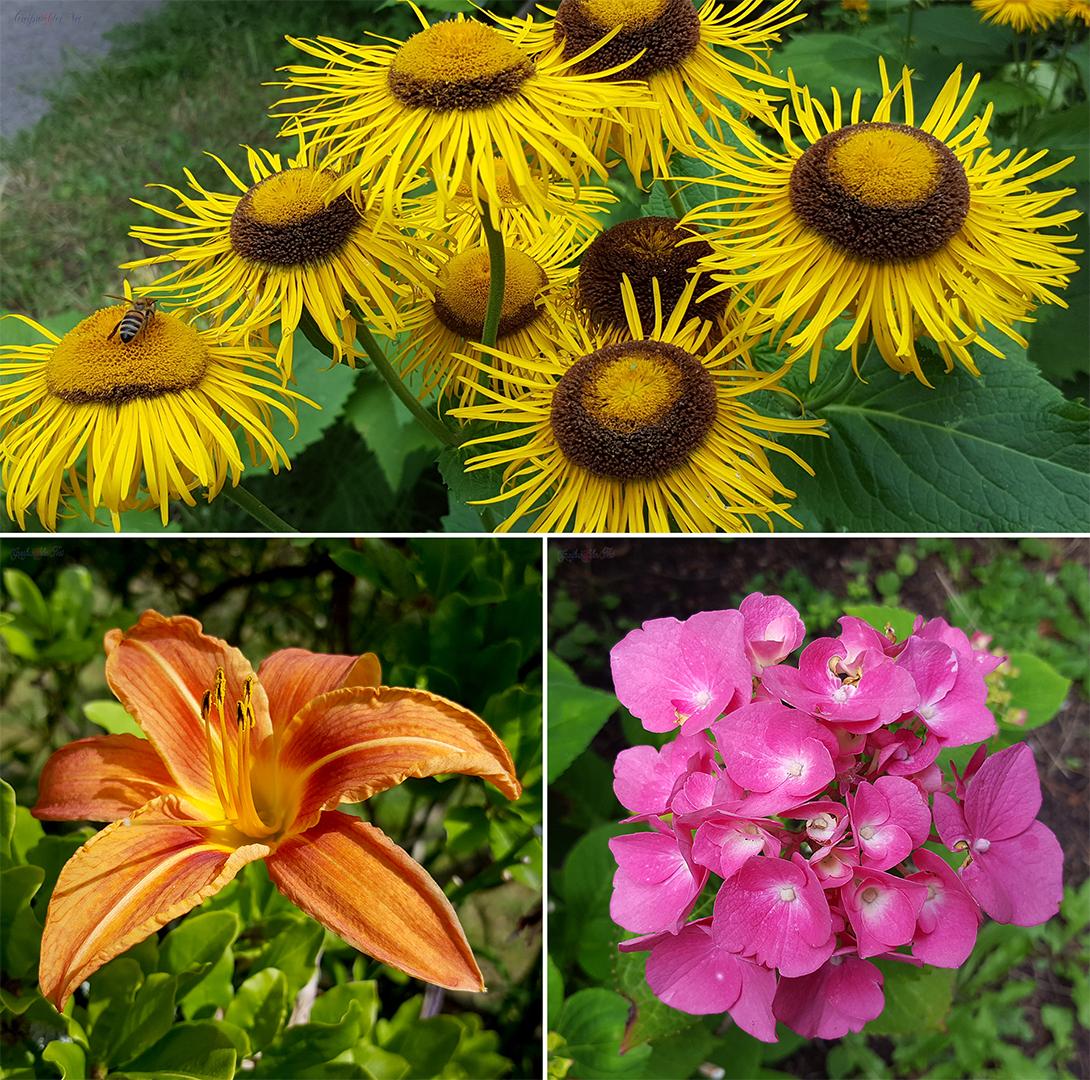 Blumen im Arboretum