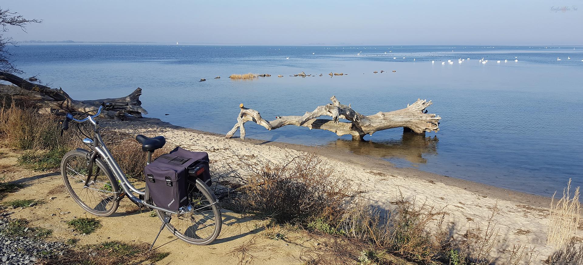 Strand am Greifswalder Bodden - Schlafende Bäume bei Loissin