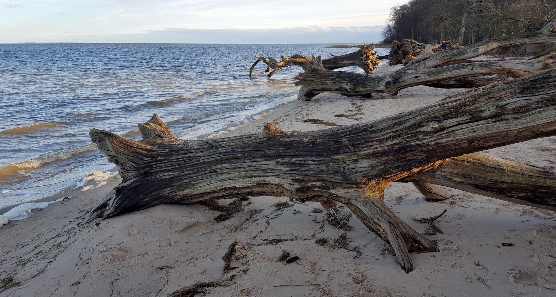 Schlafende Bäume bei Loissin nach dem Sturm