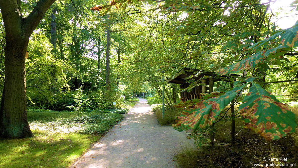 Arboretum im Herbst