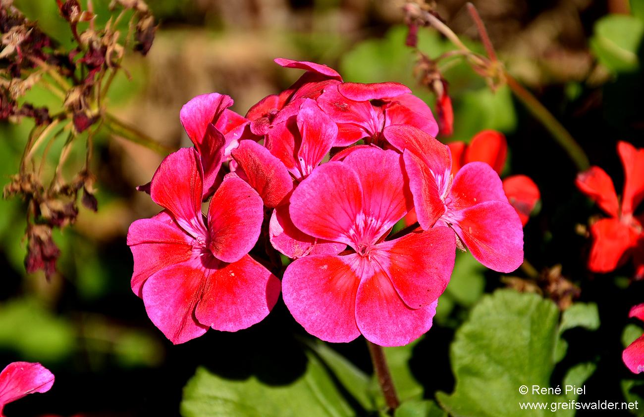 Blühen bei Sommerwetter